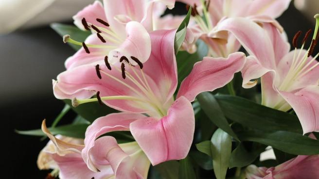 flowers-blumen verschenken Geschenke
