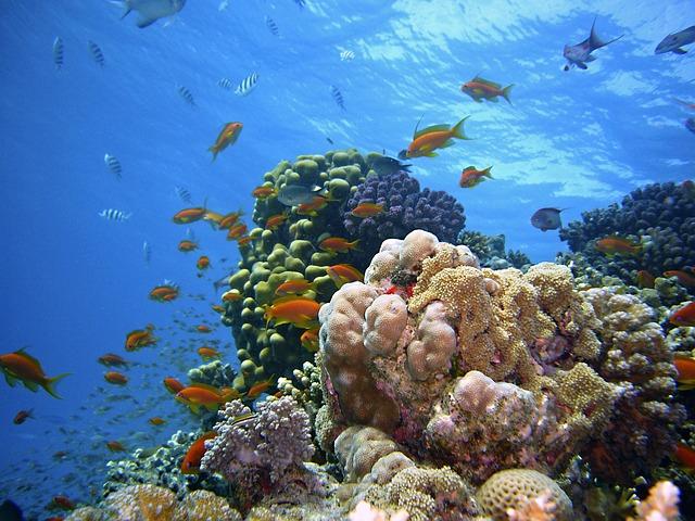 underwater-1656618_640.jpg